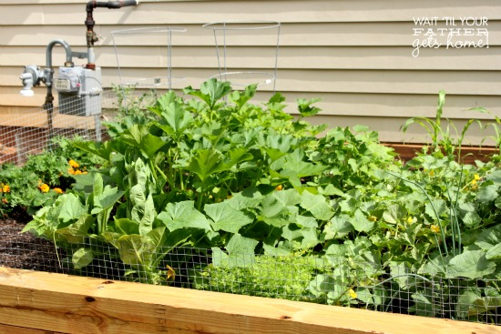 Plant a Veggie Garden @ Wait Til Your Father Gets Home #vegetables #garden #raisedbeds #seeds